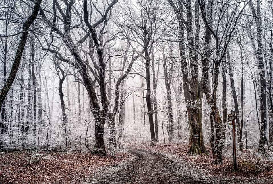 Happy New Trail